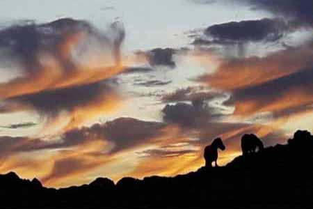 Puesta de sol con caballos salvajes en el alto de Penouta en Asturias