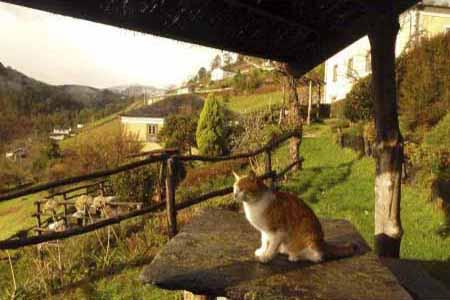 Gato Oteando Desde el Mirador de El Bosque de las Viñas